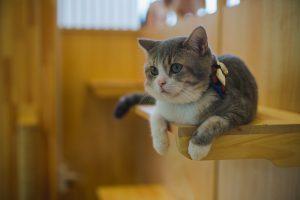 Kofuku Cat Hotel โรงแรมสำหรับแมว1